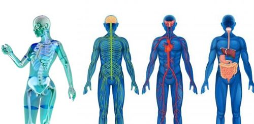 Health Occupations Introduction To Anatomy And Physiology